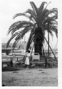 母と私と宇和島駅