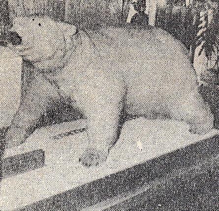 宇和島のシロクマ