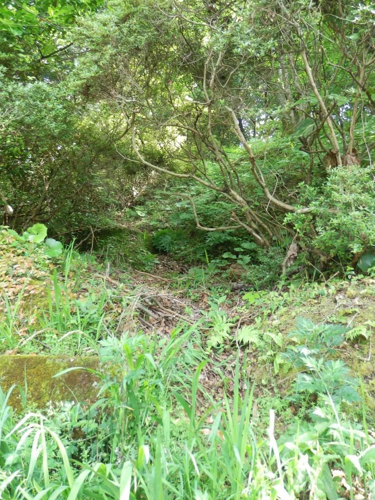 愛宕山第4の近道 3